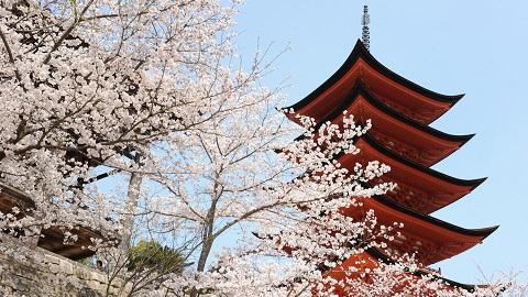 Japan Cherry Blossom Tour9 Days From $4180   Mar - Apr Visit: Tokyo, Hakone, Mt.Fuji, Kyoto, Nara, Osaka, Hiroshima