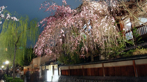 Essence of Spring Tour13 Days From $6980   Mar - Apr Visit: Tokyo, Hakone, Mt.Fuji, Kyoto, Nara, Osaka, Hiroshima, Kumamoto, Takachiho, Dogo