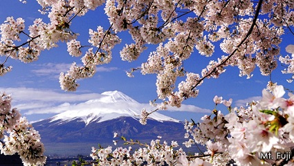 Japan Cherry Blossom Tour 7 Days