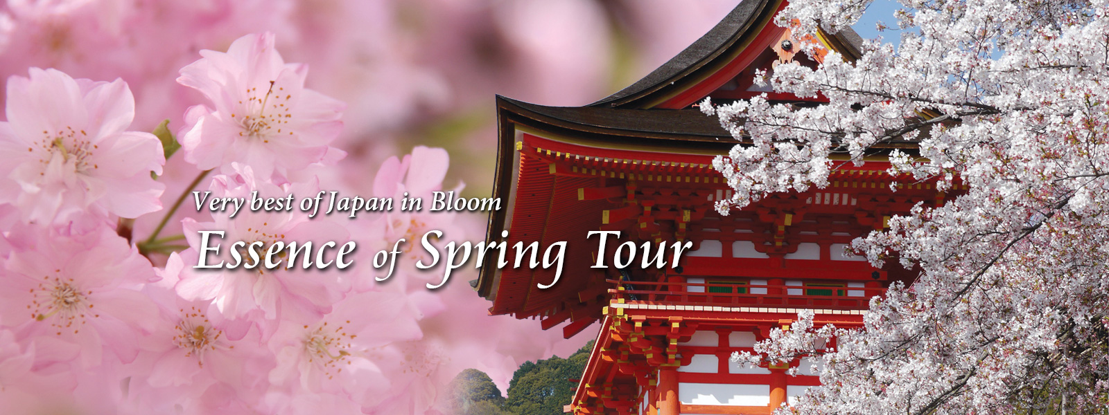 Japan Deluxe Tours