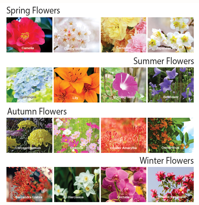 About Japanese Seasonal Flowers