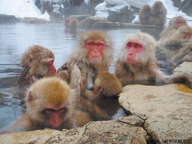 Nagano | Destinations