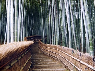 The best spots to photograph when you tour Kyoto
