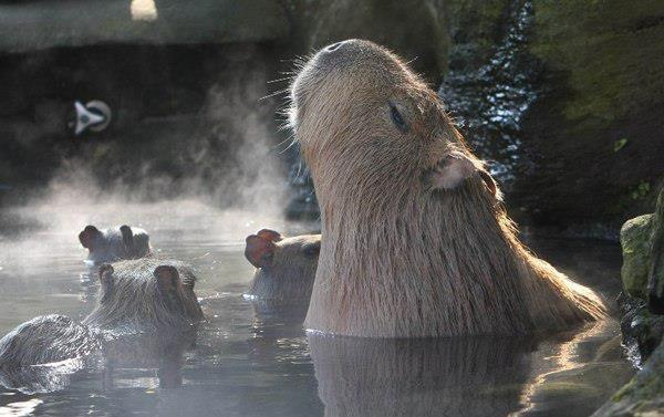 Every one loves Onsen