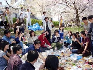 Hanami Cherry Blossom
