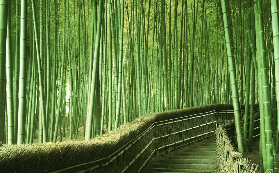 Forest of Bamboos