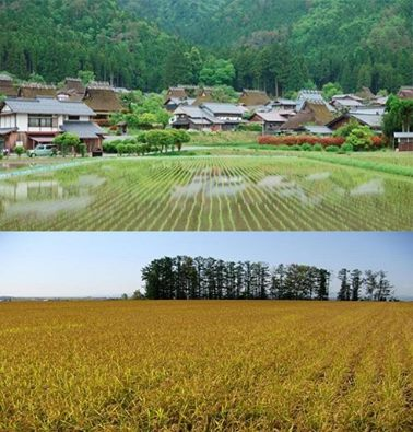 Which part of Japan do you prefer: Urban or Rural?