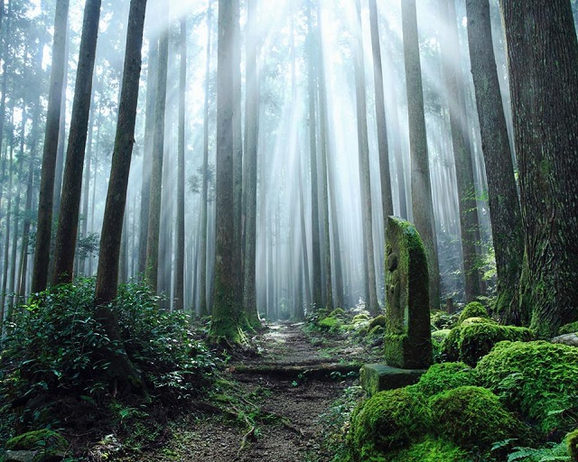 Mt. Koya and Shukubo experience the life in a Buddhist Temple.