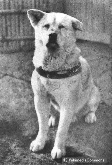 The true story about Hachi - the most famous dog in Japan