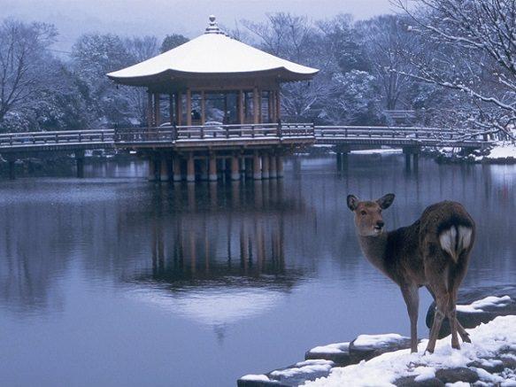 Nara | Destinations