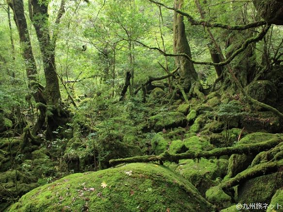 Kagoshima | Destinations