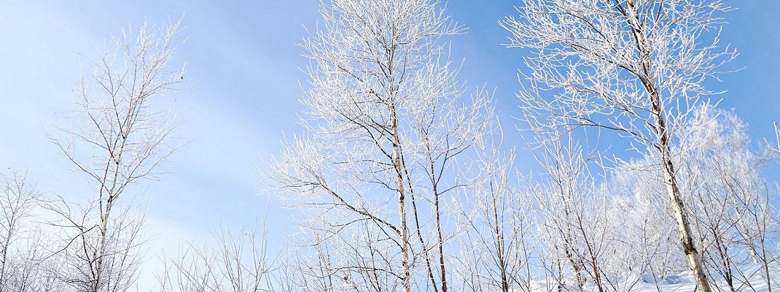 Japanese Winter Activities