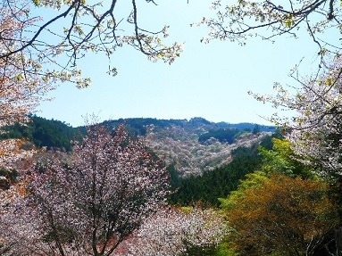 2. Yamazakura - Mountain Cherry