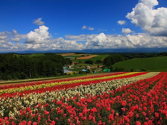 Hokkaido Biei | Western Europe in Northern Japan
