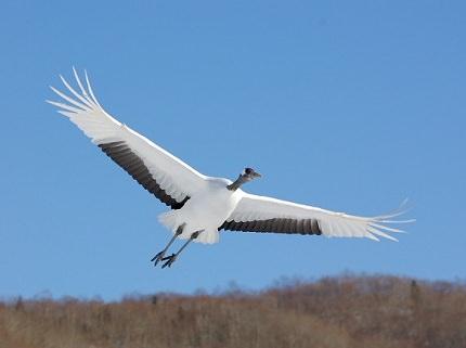 Hokkaido Tsurui | Beautiful Village of Cranes