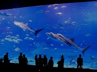Japanese Aquariums