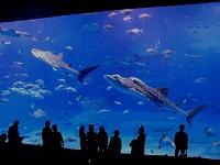 Japanese Aquariums