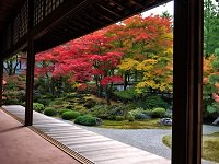 Koyo Autumn Leaves Viewing