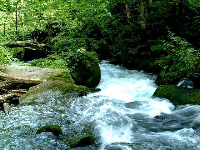 Aomori Oirase | Breathtaking Mountain Stream