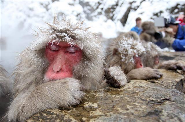 """""""Jigokudani Monkey Park"""""""
