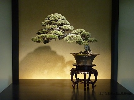 Saitama Omiya | Peaceful Paths of Bonsai