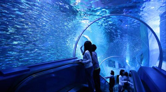 Yokohama Hakkeijima Sea Paradise | Dolphin Fantasy Tunnel
