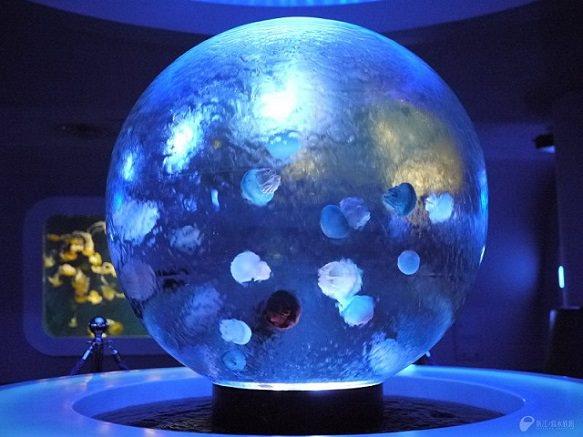 Ehoshima aquarium jellyfish japan deluxe tours for Jelly fish aquarium