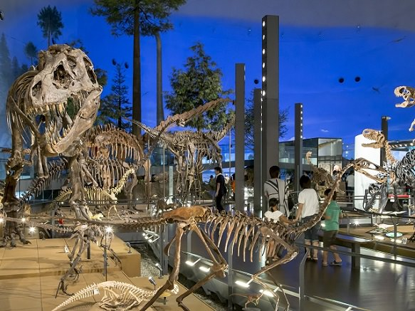 Fukui Dinosaur Museum | Time Travel with T-Rex