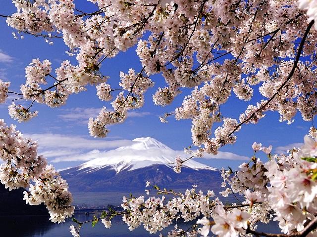Cherry Blossom Forecast 2020