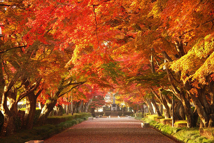Unique and characteristic autumn festivals in Tochigi