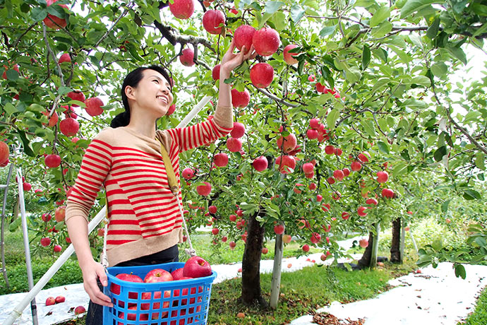 Tochigi in autumn is the kingdom of fruits