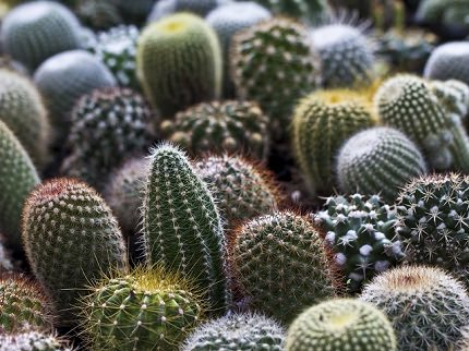 Shizuoka Izu Cactus Park | Exotic Botanical and Zoological Garden