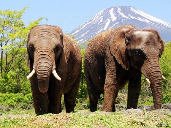 Shizuoka Fuji Safari Park | Thrilling Experience in the Wild
