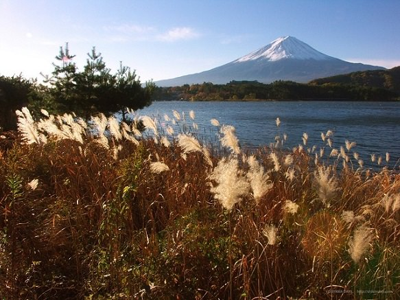 Yamanashi | Lake Kawaguchi