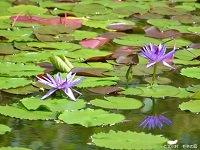 Kitagawa Village - Monet's Garden Marmottan