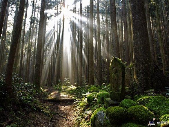 Wakayama Kumano Kodo | Spiritual Pilgrimage Route