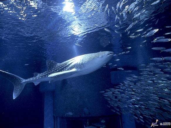 Osaka's Best Aquarium | Travel Through the Underwater Tunnel