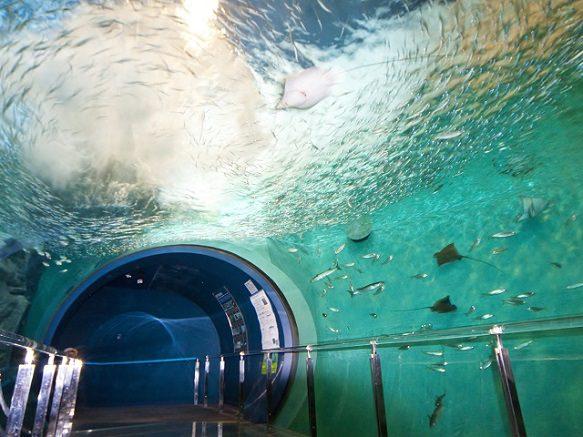 Yamaguchi Kaikyokan | 100 Kinds of Pufferfish