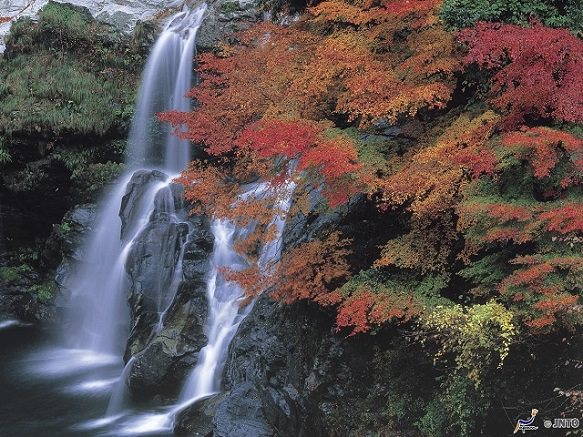 Tokushima Dodoro Falls | Tranquility in the Waters
