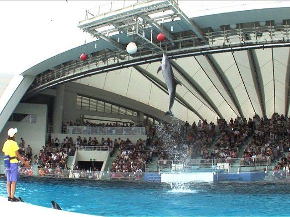 Fukuoka Marine World Uminonakamichi   Over 120 Sharks of 20 Species