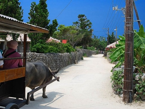 Okinawa Taketomi Island | Beautifully Preserved Traditional Ryukyu Village