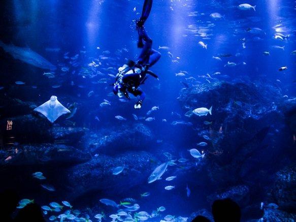 Tokyo Sumida Aquarium - Modern Design Aquarium in The Tokyo SkyTree Town