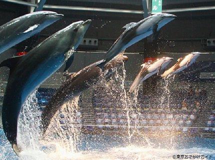 Tokyo Shinagawa   The Only Dwarf Sawfish on Display in the World