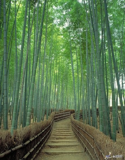 Kyoto Arashiyama | The Town of Bamboo Groves