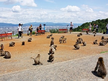 Kyoto Arashiyama Monkey Park | Meet the Monkeys