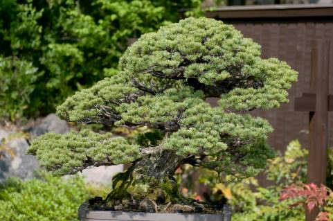 Miniature Trees | Japanese Works of Art