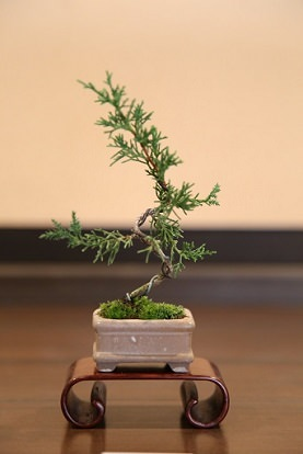 Bonsai Tree Shapes