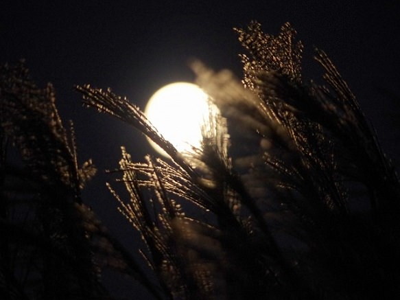 Moon Viewing with Sweet Rice Dumplings and Pampas Grass
