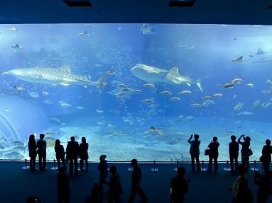5. Okinawa Churaumi Aquarium