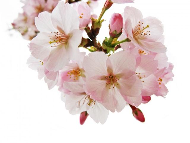 Proverb of the Day: Hana-yori-Dango